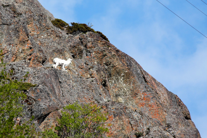 Mountain Goat seen along Seward Highway south of Anchorage.