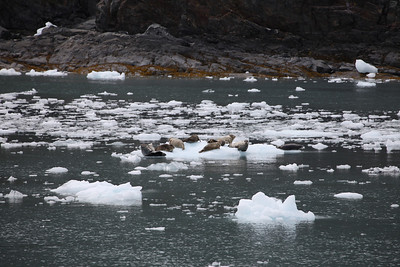 It is so odd to see ice along a shore line or on the shore.