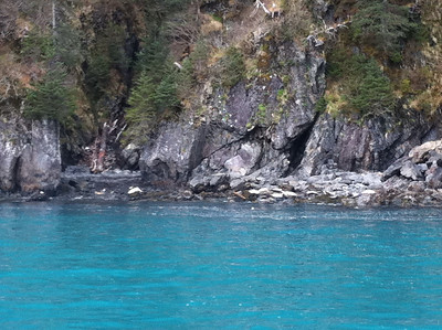 Harbor Seals in one of the coves on our way to Holgate Glacier.