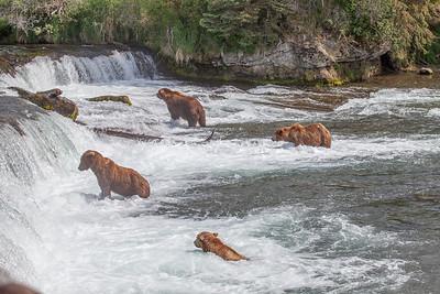Katmai National Park - Brooks Falls