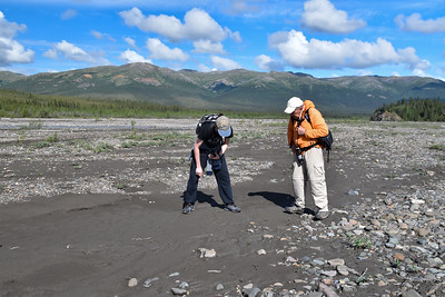 With the weather holding, it was time to take a stroll out along the Teklanika River. Here Jaden and Roger are examining an animal footprint.