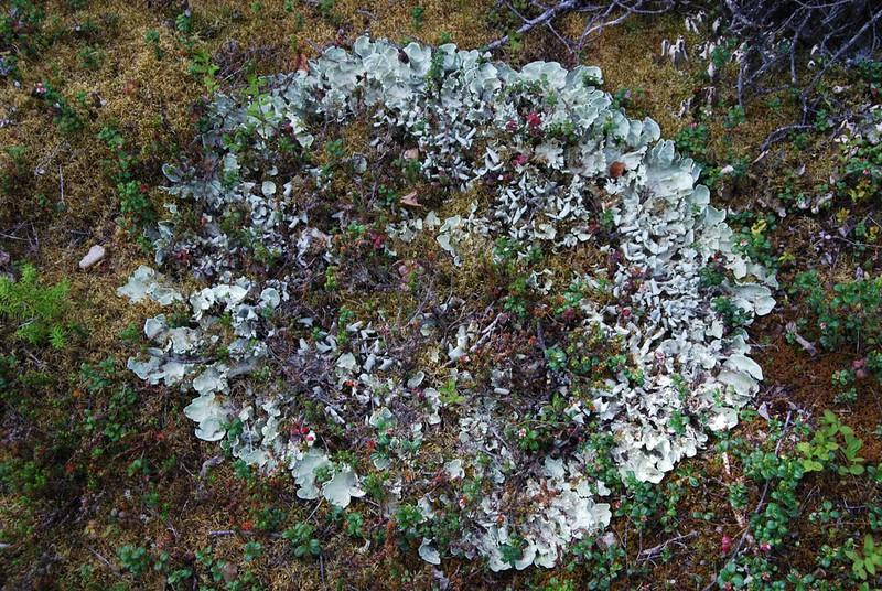 Alaska2010A087DSC_4740.JPG