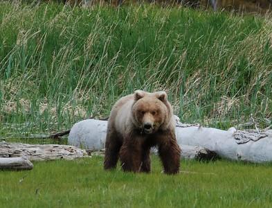 Alaska2010A163DSC_1973.JPG