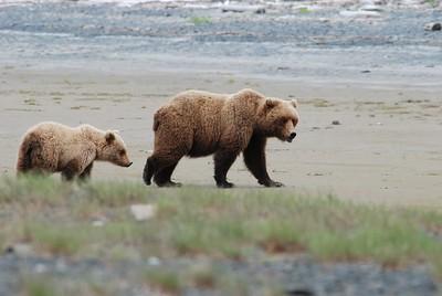 Alaska2010A214DSC_2291.JPG