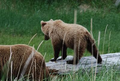 Alaska2010A206DSC_2236.JPG