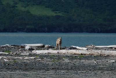Alaska2010A167DSC_2001.JPG