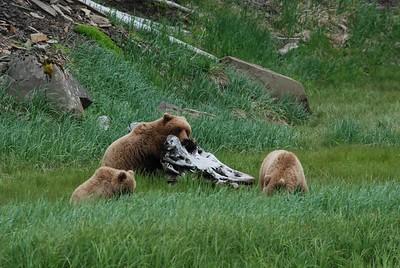 Alaska2010A200DSC_2183.JPG