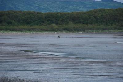 Alaska2010A130DSC_1826.JPG