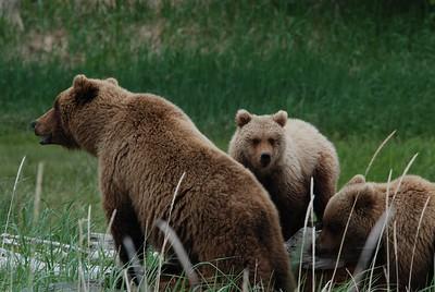 Alaska2010A207DSC_2238.JPG