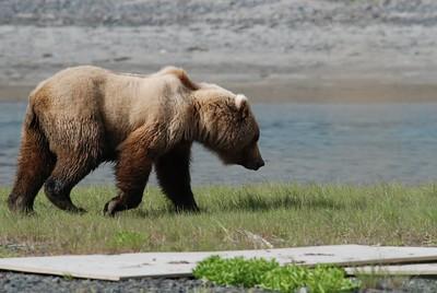 Alaska2010A154DSC_1920.JPG