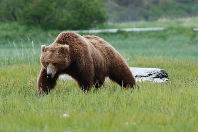 Alaska2010A149DSC_1885.JPG