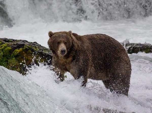 Brooks River | Katmai National Park | Alaska