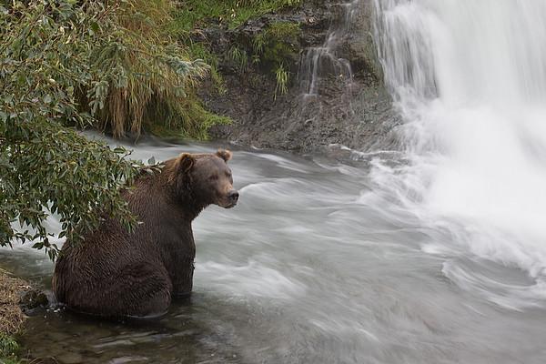 Brooks Falls | Katmai National Park | Alaska