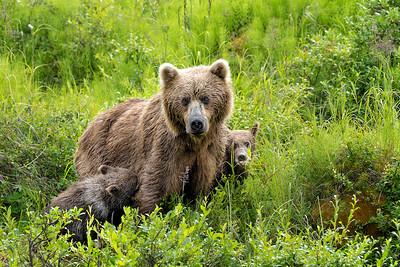 Sweet Mama Bear