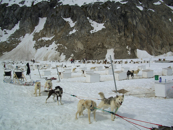 Dog Camp Denver Glacier Skagway
