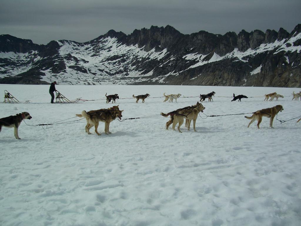 Dog Camp Denver Glacier Skagway