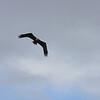Eagles : Eagles Alaska 2008