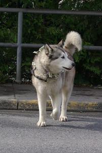 Ketchikan, Ak 09122008 088