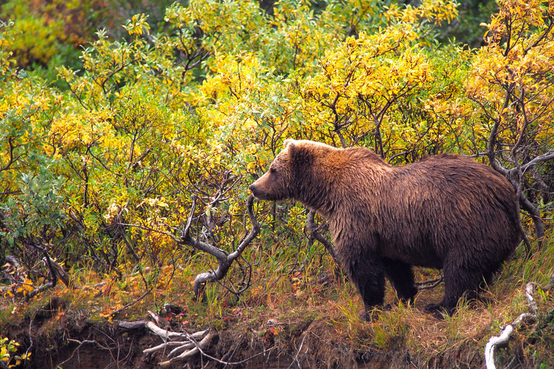 Morraine Bear 2