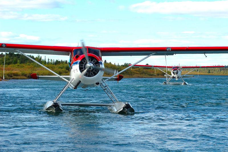 Beavers Coming Home