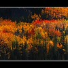 Fall color pano Denali Nat Park email