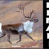 Caribou 1 Facebook