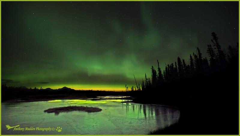 Denali n Aurora 5_edited-1
