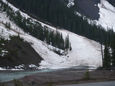 Avalanche run-out - Icefields Parkway, Alberta