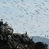 Gull Island, Kachemak Bay, Alaska