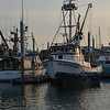 Fishing Fleet, Homer, Alaska