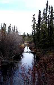 Rufus Creek at Mile 7 on the Nabesna Rd.  Runs year 'round, regardless of the temperature.  Very good tasting water, but in the spring you have to strain out the mosquitoe larva.