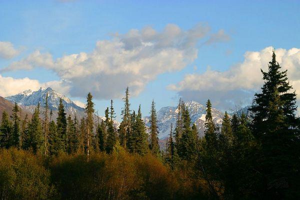 Eagle River Forest