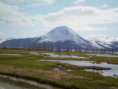 Kenai Landscape