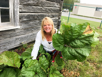Lisa picking rhubarb