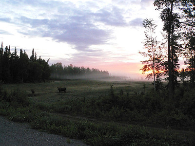 Moosie Morning - Nikiski, Alaska