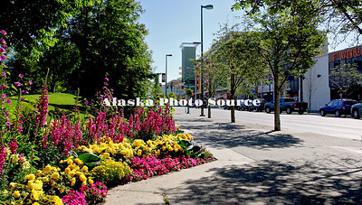 Alaska. Anchorage city of flowers along Sixth Avenue, downtown.