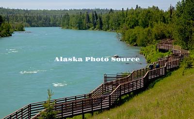 Alaska. Soldotna Creek Park Fishwalk.