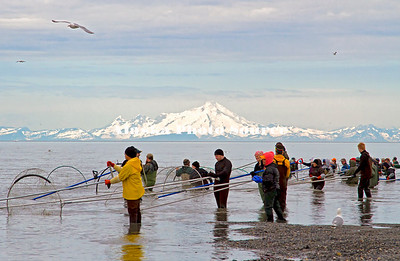 Alaska. A colorfull view of salmon dipnetters at the mouth of the Kenai River, with Mt. Redoubt in the background.