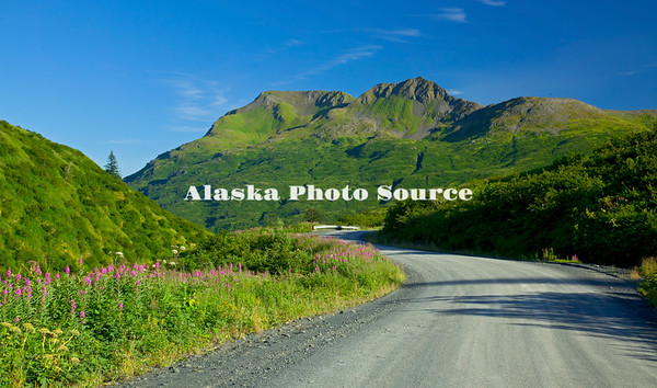 Alaska. Scenic view of emerald mountains and wildflowers while driving back toward town on the Anton Larson Bay Road, Kodiak.