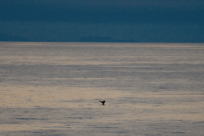 In the distance, I saw a couple humpback whales surfacing but they were far away