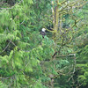 Cruise Pictures in Alaska and from Denali.  Fantastic Trip with my Mom, it was lots of fun!<br /> <br /> First bald eagle of the trip.  Very cool