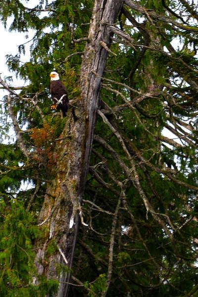 RMP_6699 crop Eagle