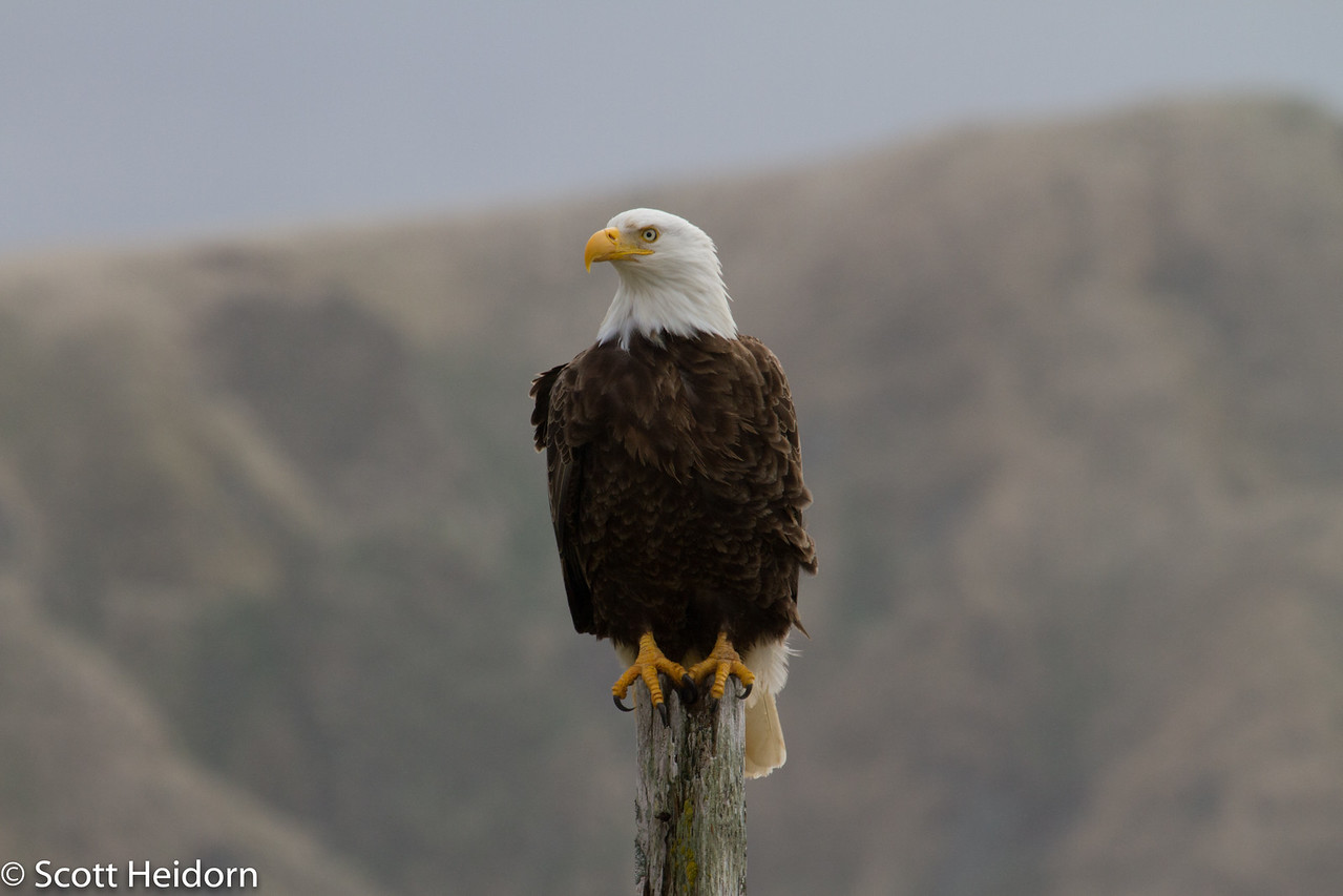 Eagles everywhere