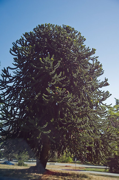 This is a Monkey Tree!   Really!