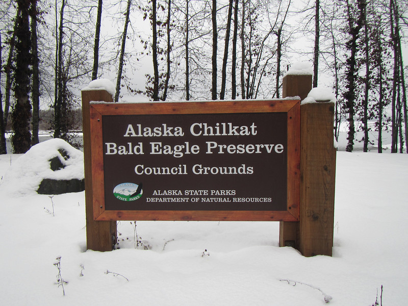 Most photos were taken of Eagles here in the Chilkat Bald Eagle Preserve north of Haines Alaska.