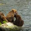 The Three Little Bears