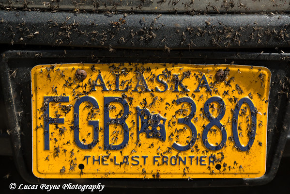 Mosquitoes splattered all over an Alaska license plate after driving the Haul Road (James Dalton Highway), Arctic Alaska.<br /> <br /> July 04, 2013