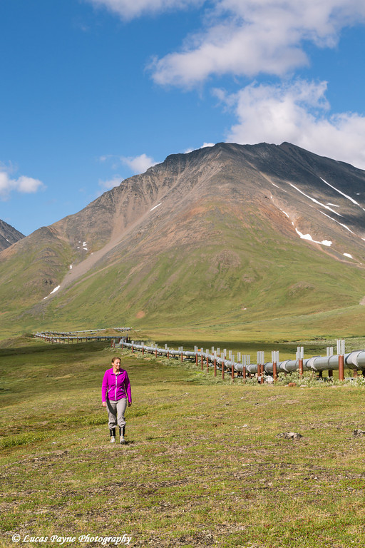 Woman hiking along the Trans Alaska Oil Pipeline south of Atigun Pass in the Brooks Range, Arctic Alaska.<br /> <br /> July 03, 2013