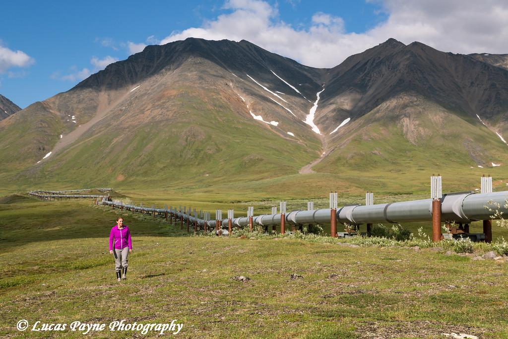 Woman hiking along the Trans Alaska Oil Pipeline south of Atigun Pass in the Brooks Range, Arctic Alaska.<br /> <br /> July 03, 2013