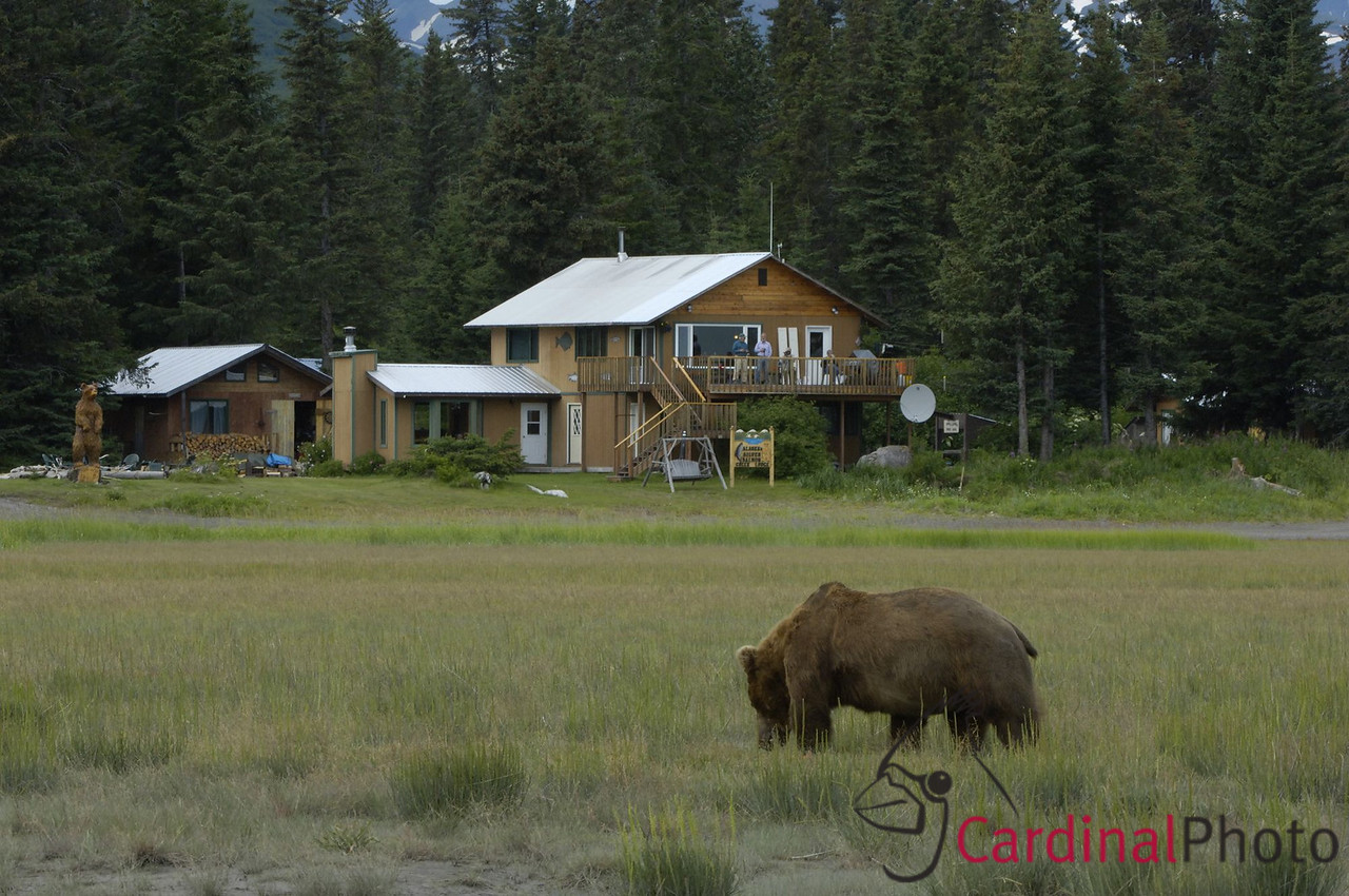Some days bear viewing began right from our rooms